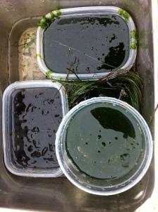 seaweed loot