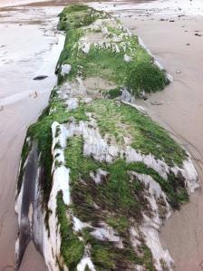 seaweed rock